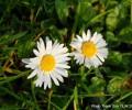 hoa ts 3