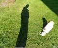 tôi và cún con