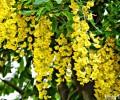 hinhnhatho&hoa 074