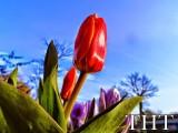 hoa (1)